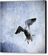 Hovering Seagull Canvas Print