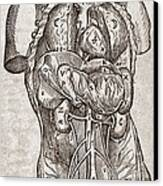 Human Male Torso, 16th Century Canvas Print by Middle Temple Library