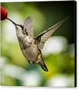 Hummers In The Garden Two Canvas Print by Michael Putnam