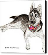 Husky With Blue Eyes And Red Collar Canvas Print by Jack Pumphrey