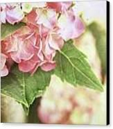 Hydrangeas Canvas Print by Stephanie Frey