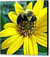I Love Pollen Canvas Print by Maria Scarfone