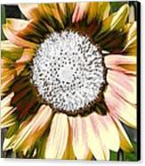 Iced Oatmeal Cookie Sunflower Canvas Print by Devalyn Marshall
