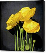 Iceland Yellow Poppies Canvas Print by Paul Grand Image