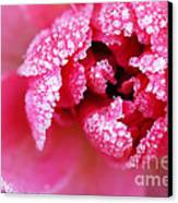 Icy Rose Canvas Print