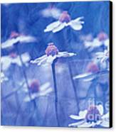 Imagine 06ht01 Canvas Print by Variance Collections