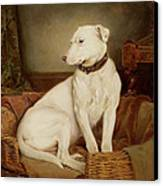 In Disgrace Canvas Print by William Woodhouse