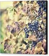 In The Vineyard Canvas Print by Lisa Russo