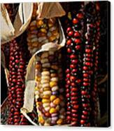 Indian Corn Canvas Print by Susan Herber