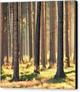 Indian Summer In Woods Canvas Print by Matthias Haker Photography