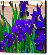 Iris 23 Canvas Print by Pamela Cooper