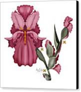 Iris IIi  Canvas Print by Anne Norskog