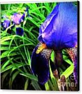 Iris Canvas Print by Kevyn Bashore