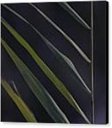 Just Grass Canvas Print by Heiko Koehrer-Wagner