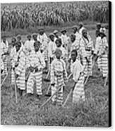 Juvenile Convicts At Work In The Fields Canvas Print by Everett
