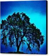 King Oak Canvas Print by Helen Carson