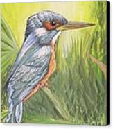 Kingfisher Canvas Print by Debra Piro