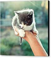 Kitten In Hand, 2010 Canvas Print by Emily Golitzin