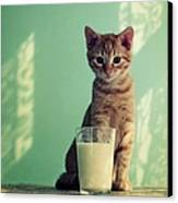 Kitten With Glass Of Milk Canvas Print