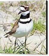Klassic Killdeer Canvas Print by Lynda Dawson-Youngclaus