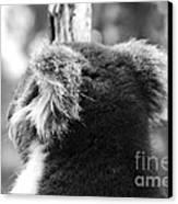 Koala Canvas Print by Camilla Brattemark