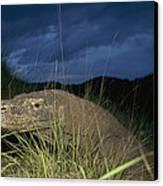Komodo Dragon Varanus Komodoensis Canvas Print