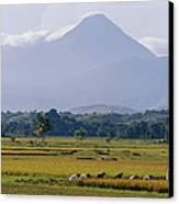 Laborers In A Rice Field Work Canvas Print