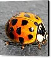 Ladybug In The Sun Canvas Print