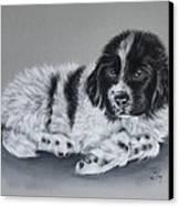 Landseer Pup Canvas Print by Patricia Ivy