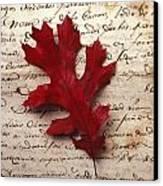 Leaf On Letter Canvas Print