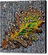 Leaf On The Sidewalk Canvas Print by Robert Ullmann