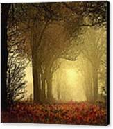 Leaf Path Canvas Print by Robert Foster