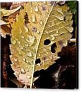 Leafy Tears Canvas Print