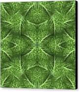 Lettuce Live Green  Canvas Print