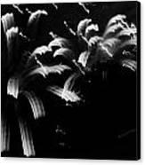 Licorice Sky Canvas Print