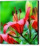 Lilies Ascending Canvas Print by Fraida Gutovich