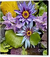 Lilies No. 12 Canvas Print