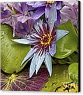 Lillies No. 9 Canvas Print by Anne Klar