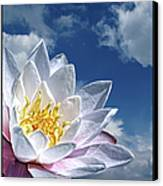 Lily Flower Against Sky Canvas Print