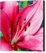 Lily Canvas Print by Lorraine Louwerse