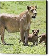 Lioness With Cubs Canvas Print by Carson Ganci
