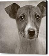Little Jack Monochrome Canvas Print by Pat Abbott
