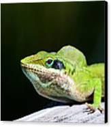Lizard Canvas Print by Jenny Ellen Photography