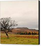Lone Tree And Higger Tor Canvas Print