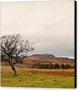 Lone Tree And Higger Tor Canvas Print by Siobhan Brennan-Raymond