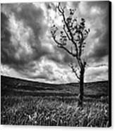 Lone Tree On The Ayrshire Moors Canvas Print