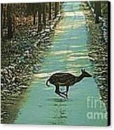 Lonely Deer Canvas Print by Ankeeta Bansal