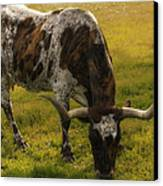 Long Horn Mid Fall Canvas Print by Kelly Rader