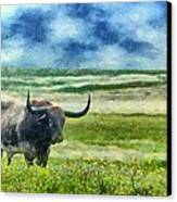 Longhorn Prarie Canvas Print by Jeff Kolker