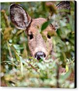 Look What I Found In My Garden Canvas Print